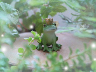 ぬるま湯の中のカエルの王様