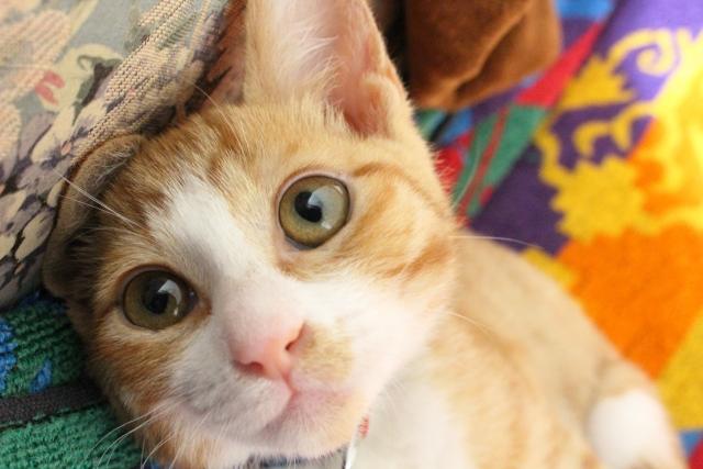 波動が高い猫からの贈り物