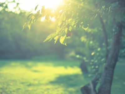 不安や恐れや心配は、「今」にいると現れない。