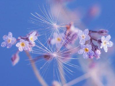 「思い込み」はマボロシ。手放して風に乗っていく。